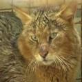 رهاسازی یک قلاده گربه جنگلی به دامان طبیعت نکا