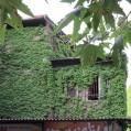 خانه های سبز و زیبا در نکا/عکس