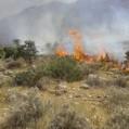 آتش سوزی در ارتفاعات چلم کوه نکا
