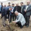 عملیات کاشت ۶ هزار اصله نهال در سیمان مازندران+تصویر