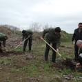 کاشت سه هزار اصله نهال در پادگان قدس نکا/تصویر