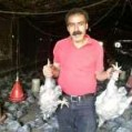 ۹ هزار قطعه مرغ درگلوگاه کباب شدند