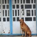 """""""سگ های ولگردنکا""""مشکلات لاینحل چندین ساله درشهرستان"""