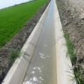 اجرای ۱۳۰۰ متر لاینینگ در اراضی شالیزاری نکا