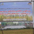 آیین روز مزرعه ملی ترویج و توسعه کشاورزی ارگانیک ایران درنکابرگزارشد/تصویر
