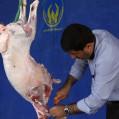 نذورات قربانی مردم و خیرین دربین ۳۰ درصد ازمدجویان امدادنکاتوزیع شد/ تصویر