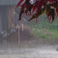آغاز بارندگیها از فردا شب در مازندران