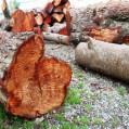 کشف ۲ تن چوب جنگلی قاچاق در گلوگاه