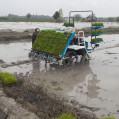 آغاز کشت مکانیزه برنج در نکا / تصویر