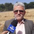 پیش بینی تولید ۲۶ هزار تنی گندم در نکا