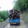 توقیف دوخودرو حامل ۵ تن چوب قاچاق در میاندورود