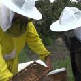 تولید بیش از ۱۵۳تُن عسل درنکا