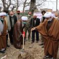 کاشت ۴۰۰ اصله نهال صنوبر در بقاع متبرکه نکا