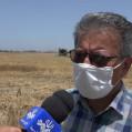 مجید بهادری : کشاورزان ،در برداشت گندم عجله نکنند/ تصویر